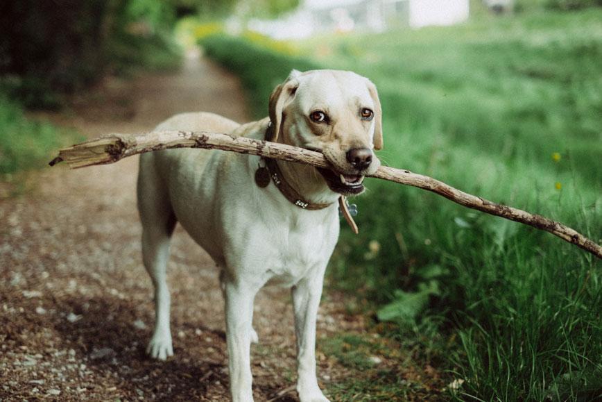 dog wound care supply